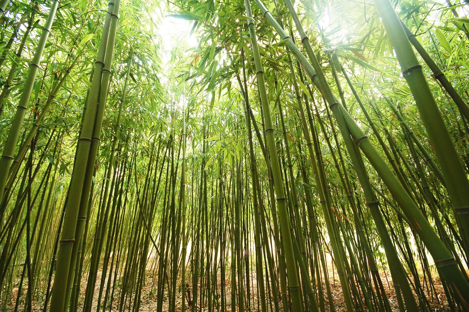 Self Watering Power Of Persistence The Chinese Bamboo Tree James