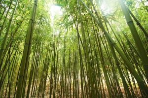 Power of Persistence: The Chinese Bamboo Tree