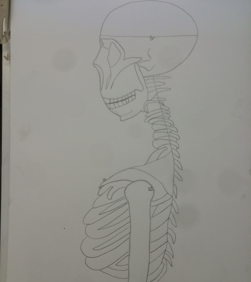 Observation drawing of a skeleton by Cartoonist Jamaal R. James for James Creative Arts And Entertainment Company.